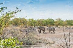 Familia de elefantes en el movimiento foto de archivo