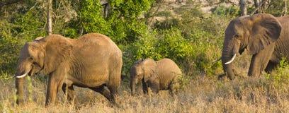 Familia de elefantes Kenia África Imagen de archivo