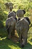 Familia de elefantes que caminan encima de una colina Fotos de archivo libres de regalías
