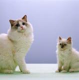 Familia de gato Imágenes de archivo libres de regalías
