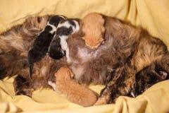 Familia de gato dulce - apenas gatitos recién nacidos con un gato de la madre Gatitos rojos, blancos y negros Foto de archivo