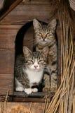 Familia de gatos Foto de archivo