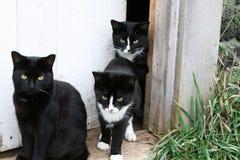 Familia de gatos en el umbral Fotografía de archivo
