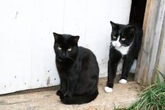 Familia de gatos en el umbral Imágenes de archivo libres de regalías