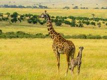 Familia de Giraff Fotografía de archivo libre de regalías