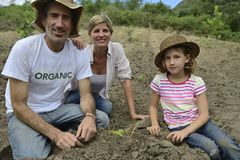 Familia de granjeros orgánicos que plantan el almácigo Fotografía de archivo libre de regalías