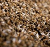 Familia de la abeja Imagen de archivo