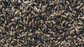 Familia de la abeja y concepto del negocio Imagen de archivo