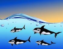 Familia de la ballena en el océano Fotografía de archivo