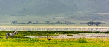 Familia de la cebra en el cráter de Ngorogoro Imagenes de archivo