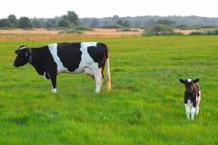 Familia de la vaca imagen de archivo