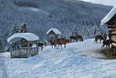 Familia de los ciervos Foto de archivo libre de regalías