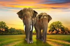 Familia de los elefantes en puesta del sol Fotografía de archivo