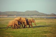 Familia de los elefantes en su paseo Imagen de archivo