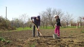 Familia de los granjeros que planta las patatas en campo vegatable en primavera temprana metrajes