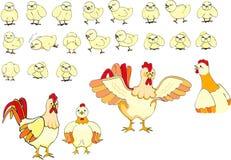 Familia de los polluelos Foto de archivo libre de regalías
