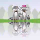 Familia de mapaches en el río Imagenes de archivo