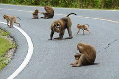 Familia de mono Foto de archivo libre de regalías