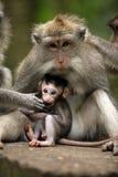 Familia de monos Fotos de archivo libres de regalías