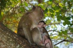 Familia de monos Fotos de archivo