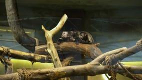 Familia de monos en el banco en un parque zoológico almacen de video
