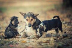 familia de perro Foto de archivo