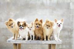 Familia de perros Imagen de archivo libre de regalías