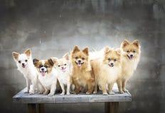 Familia de perros Imagen de archivo
