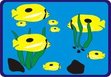 Familia de pescados amarilla del océano Imágenes de archivo libres de regalías