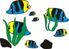 Familia de pescados hermosa del océano en color azul negro amarillo en el mar Fotos de archivo libres de regalías