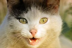 Familia de primer felino de la cabeza, emociones sorprendida por el encuentro inesperado, naturaleza imagen de archivo