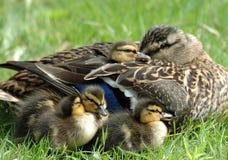 Familia de reclinación Foto de archivo