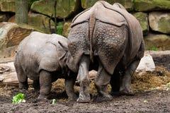 Familia de rhinos Imágenes de archivo libres de regalías