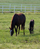 Familia del caballo Imágenes de archivo libres de regalías