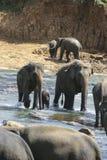 Familia del elefante Imagenes de archivo