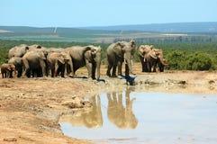 Familia del elefante imágenes de archivo libres de regalías