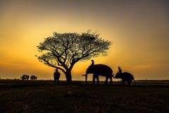 Familia del elefante Foto de archivo libre de regalías