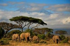 Familia del elefante delante de Mt. Kilimanjaro Fotos de archivo libres de regalías
