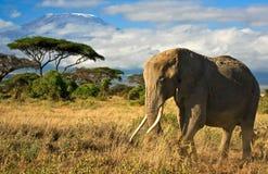 Familia del elefante delante de Mt. Kilimanjaro Imagen de archivo libre de regalías