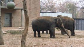 Familia del elefante en Berlin Zoo Tiro del primer metrajes