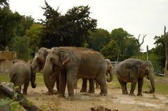 Familia del elefante en el PARQUE ZOOLÓGICO, Praga, República Checa Fotografía de archivo libre de regalías