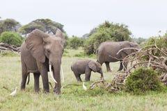 Familia del elefante en Kenia imagen de archivo libre de regalías
