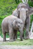 Familia del elefante en un parque zoológico de Berlín, Alemania Imagen de archivo