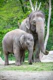 Familia del elefante en un parque zoológico de Berlín, Alemania Imagenes de archivo