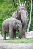 Familia del elefante en un parque zoológico de Berlín, Alemania Foto de archivo libre de regalías
