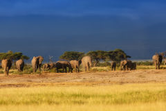 Familia del elefante momentos antes de la lluvia Fotos de archivo libres de regalías
