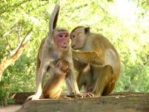 Familia del mono Imagenes de archivo