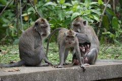 Familia del mono Fotos de archivo