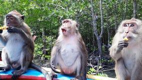 familia del mono en Tailandia que come la piña imagenes de archivo