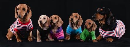 Familia del perro basset Fotografía de archivo libre de regalías